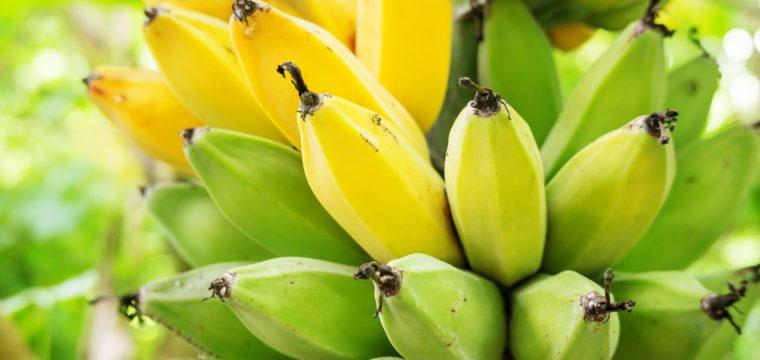 Dietas com restrição podem contar com produtos da agricultura familiar
