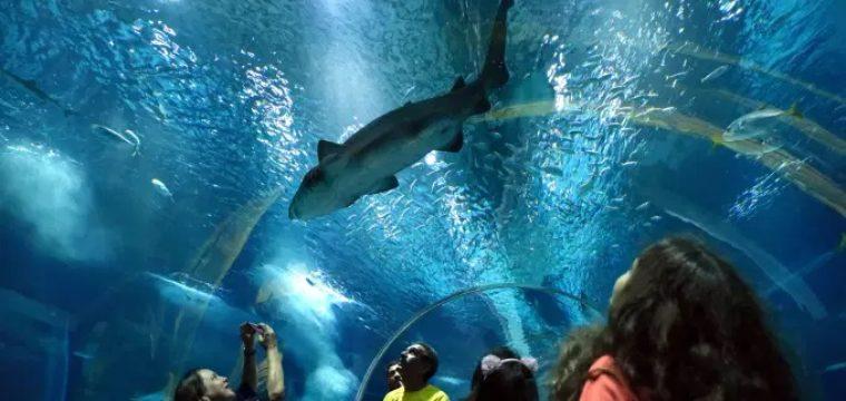 Tubarões são as estrelas de programação do AquaRio