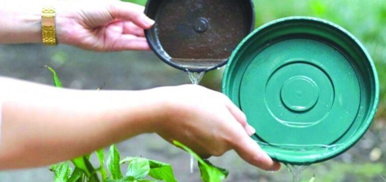 Espírito Santo registra mais de 15 mil casos de chikungunya
