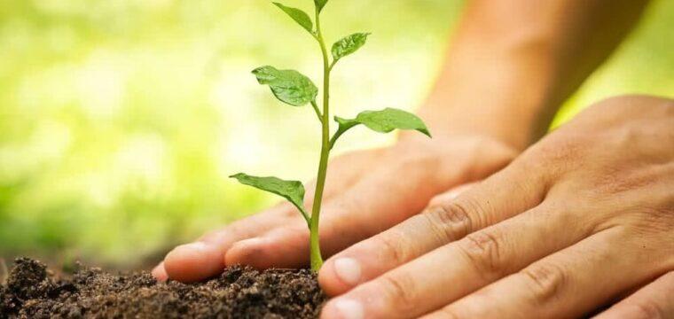ONG realiza manutenção e poda de mudas de  árvores do Hospital Unimed Sul Capixaba