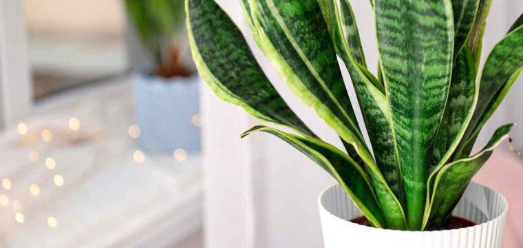10 plantas de fácil cultivo para ter em casa e no apartamento