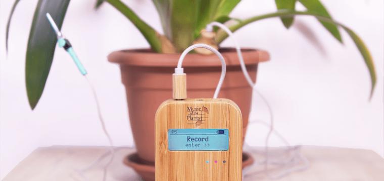 Música para plantas: dados do Spotify apontam aumento de 1400% na busca