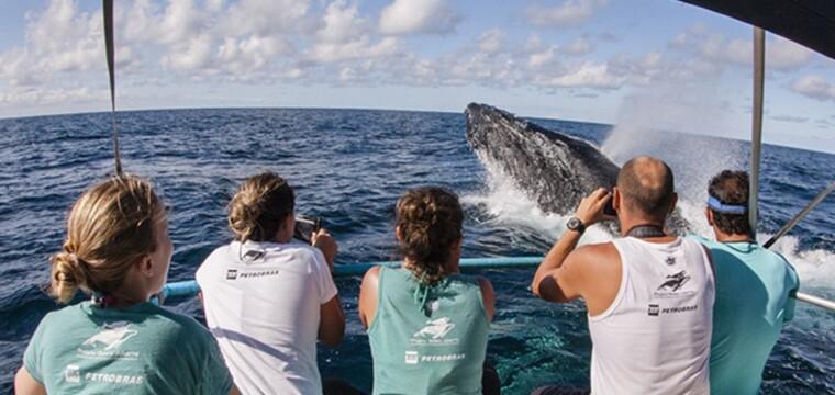 Observação de baleias