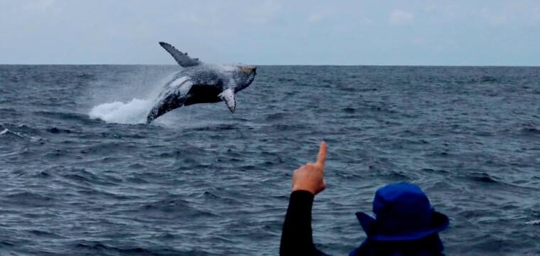 Setur estimula turismo de observação de baleias em municípios litorâneos