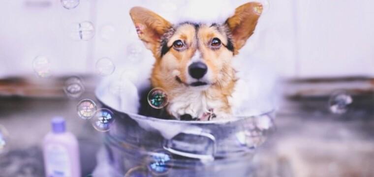 Banho em pets no frio? Saiba o que os veterinários recomendam